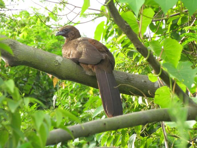 Pássaro - Penha - SC - Brasil