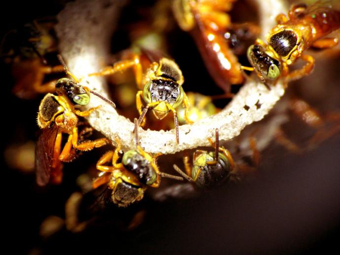 Colmeia de abelhas no relógio de água do condomínio