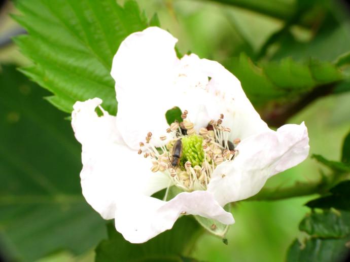 Flor e Inseto 002