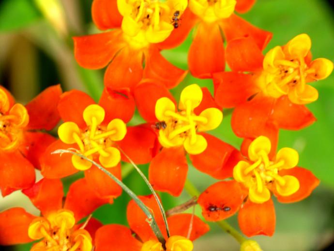 Flor e Inseto 003
